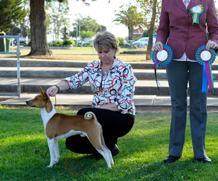 Winning at a Basenji Specialty Show